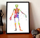 Grafika - Anatómia kostry - 10266901_