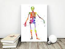 Grafika - Anatómia kostry - 10266903_