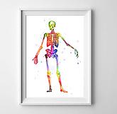 Grafika - Anatómia kostry - 10266906_