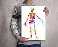 Grafika - Anatómia kostry - 10266909_