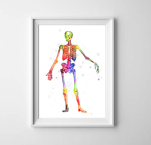 Anatómia kostry