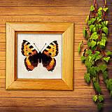 Obrázky - Vyšívaný motýľ - 10267681_