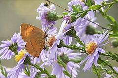 Fotografie - Motýľ 002 - 10275852_