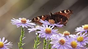 Fotografie - Motýľ 004 - 10275904_