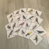 - Naše vtáky  - 10282855_