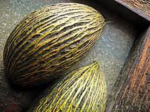 Obrazy - Zelené orechové stromy - 10288484_