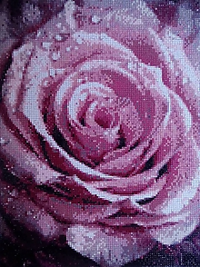 Obrazy - Ružová ruža - 10286896_