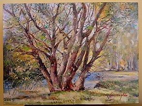 Obrazy - Strom pri rieke - 10287387_