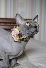 Pre zvieratká - Kožený obojok pre mačku Bastet - 10289051_