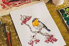 Kresby - Červenka (reprodukce autorské malby, A4) - 10295149_