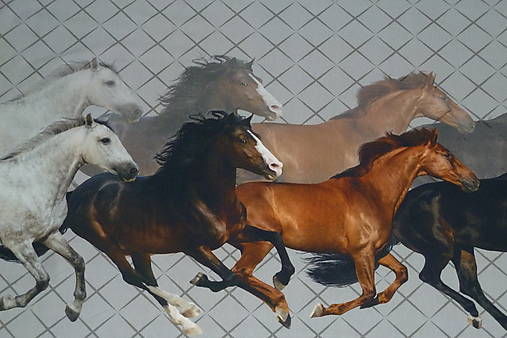 Kone úplet digi