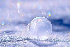 Fotografie - Mrazivý január - 10310439_