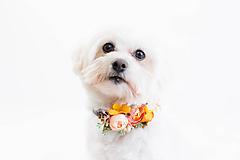 Pre zvieratká - Kvetinový obojok pre psíka Sweet orange - 10312672_