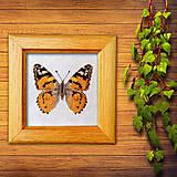 Obrázky - Vyšívaný motýľ - 10314653_