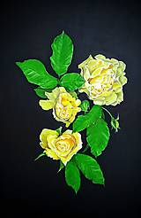 Obrazy - Yellow roses - 10319324_