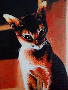 Obrazy - mačka oranžová - 10319835_