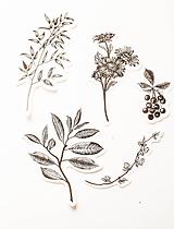 "Papier - Set nálepiek ""Botanická Zlatá"" - 10319771_"