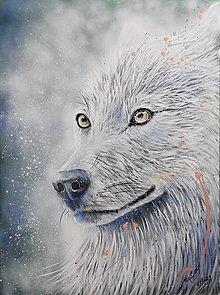 Obrazy - obraz vlka - 10323877_