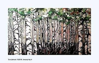 Obrazy - brezový háj - 10320318_