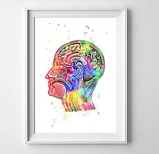 Grafika - Anatómia hlavy - 10327289_
