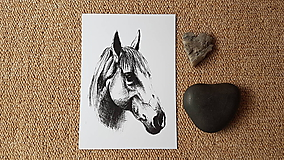 Papiernictvo - Pohľadnica :Kôň - 10325865_