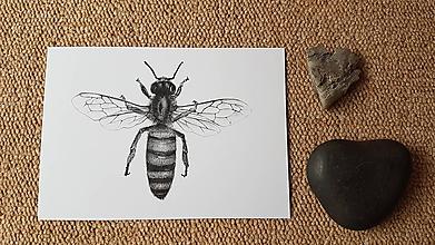 Papiernictvo - Pohľadnica : Včela - 10325841_