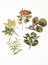 "Papier - Set nálepiek ""Botanický atlas"" - 10332619_"