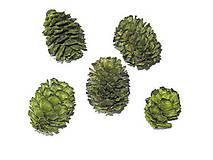 Polotovary - Sušené šišky Meridianum zelené - 10339683_