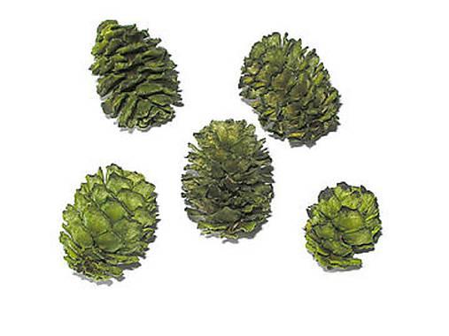 Sušené šišky Meridianum zelené