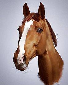 Grafika - Portréty na prianie - kone - 10341752_
