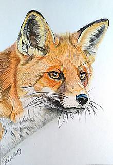 """Kresby - Farebná kresba """"Líška hrdzavá - Vulpes vulpes"""" - 10345573_"""