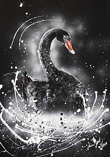 Obrazy - čierna labuť - 10363826_