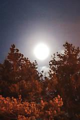 Fotografie - Za mesačného svitu - 10368844_