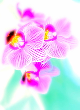 Fotografie - Orchidea II. - 10382202_