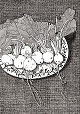 Reďkovky - reprodukcia