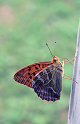 Fotografie - motýľ  - 10387358_