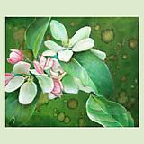 Obrazy - Jabloňové květy - olejomalba na plátně - 10385942_
