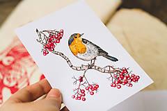 Papiernictvo - Červenka s jeřabinami - pohlednice - 10391180_