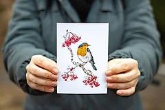 Papiernictvo - Červenka s jeřabinami - sada pohlednic, 4 ks - 10391220_