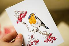 Papiernictvo - Červenka s jeřabinami - sada pohlednic, 4 ks - 10391223_