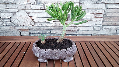 Nádoby - Kvetináč na sukulenty, kaktusy, bonsaje - 10405086_