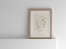 Kresby - Akvarelový art print| botanická ilustrácia Zemolez kozí - 10410612_