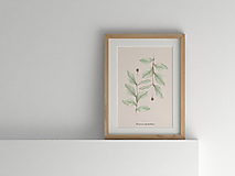 Kresby - Akvarelový art print  botanická ilustrácia Zemolez kozí - 10410612_