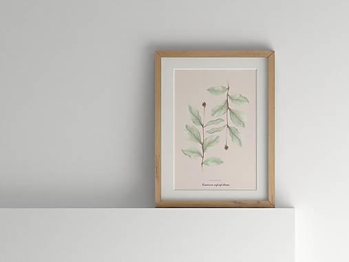 Akvarelový art print| botanická ilustrácia Zemolez kozí