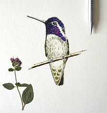 Kresby - Kolibrík -