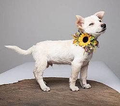 Pre zvieratká - Obojok pre psíka Summer poesy - 10435663_