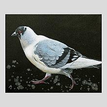 Obrazy - Kráčející holub - olejomalba na plátně - 10443069_