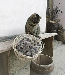 Dekorácie - Kytica z bodliakov s nádychom zimy - 10460165_