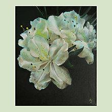 Obrazy - Bílé rododendrony - olejomalba na plátně - 10458896_