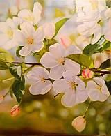 Obrazy - Spring-Jar - 10463657_